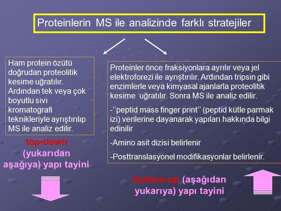 Proteinlerin MS ile analizinde farklı stratejiler Ham protein özütü doğrudan proteolitik kesime uğratılır. Ardından tek veya çok boyutlu sıvı kromatog