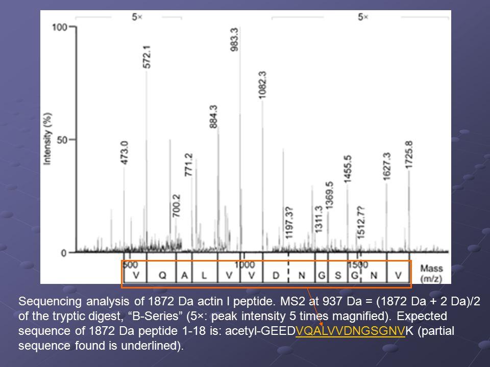 "Sequencing analysis of 1872 Da actin I peptide. MS2 at 937 Da = (1872 Da + 2 Da)/2 of the tryptic digest, ""B-Series"" (5×: peak intensity 5 times magni"