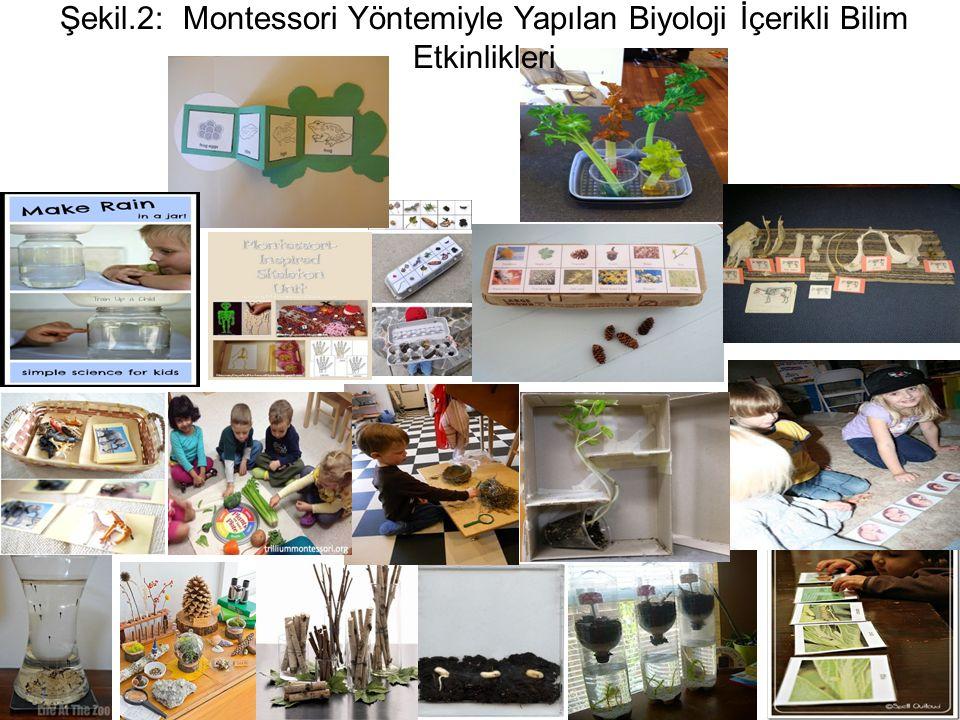 Şekil.2: Montessori Yöntemiyle Yapılan Biyoloji İçerikli Bilim Etkinlikleri