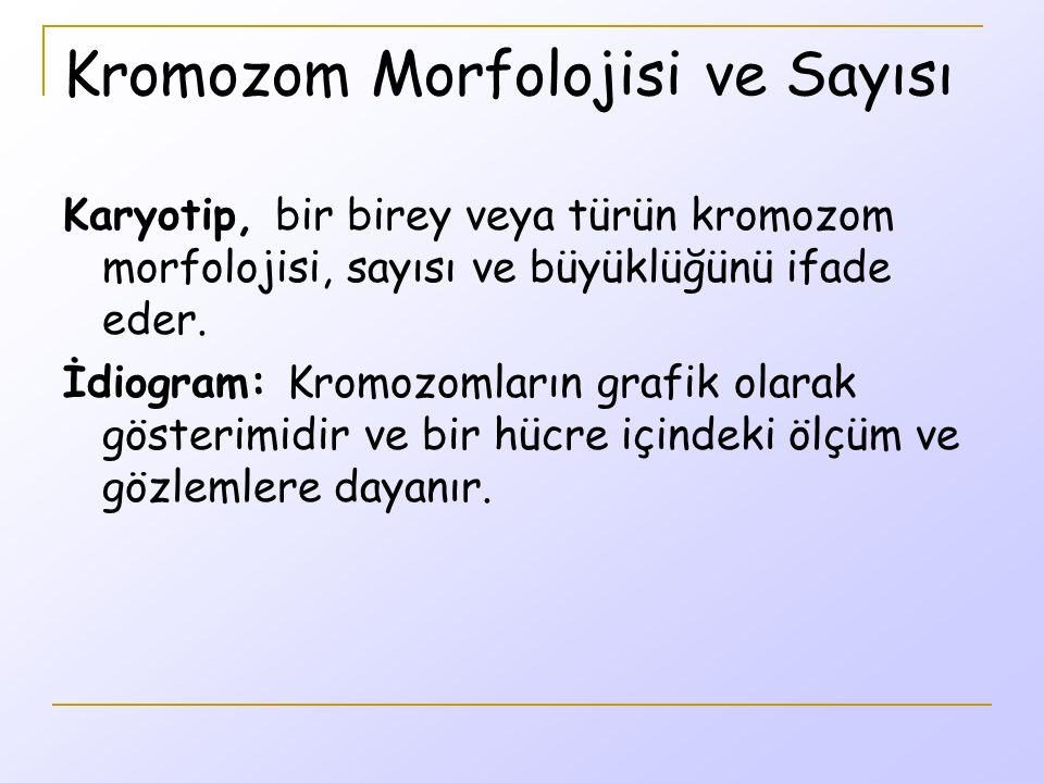 Kromozom Morfolojisi ve Sayısı Karyotip, bir birey veya türün kromozom morfolojisi, sayısı ve büyüklüğünü ifade eder.