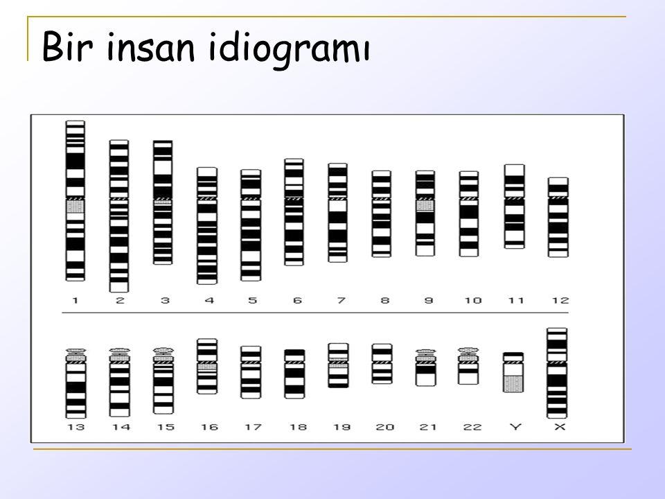 Karyotipler mayotik ve mitotik kromozomlara dayanır ve kromozom bantlama yöntemleri ile detaylı analiz yapılabilir.