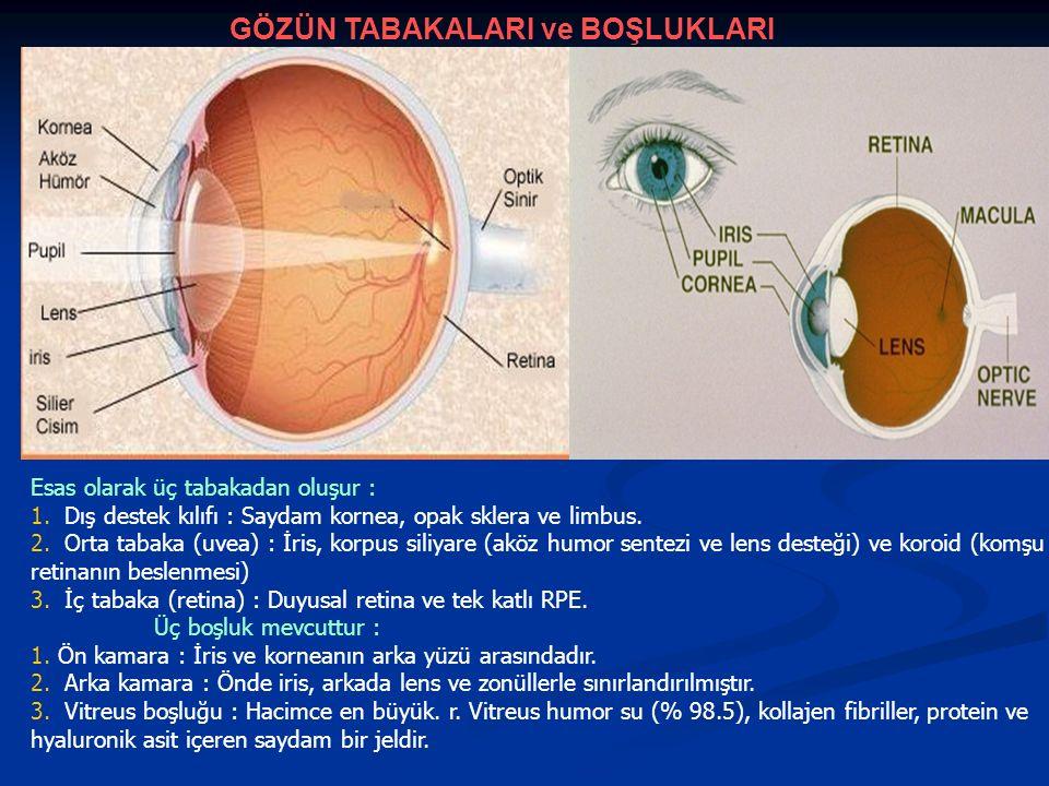 Allerji Orbital selülit Herpes zoster OKULER BELİRTİLERİN AYIRICI TANISI 1.Göz kapağının şişmesi ve kızarması