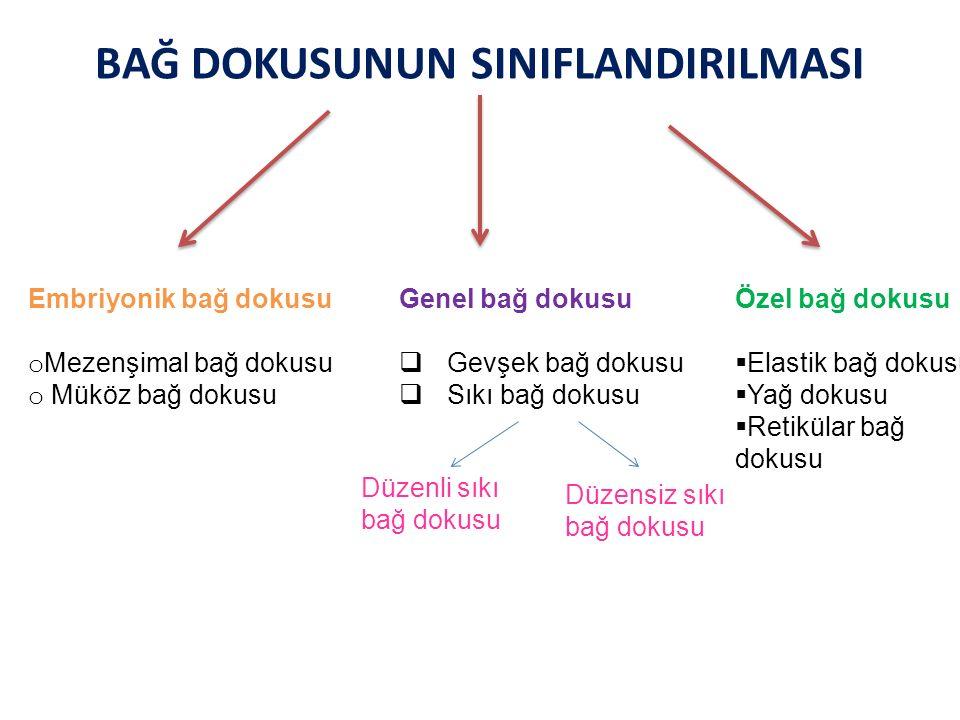 Eğer fibriller düzenli ve birbirine paralel demetler oluşturacak şekilde dağılım gösterirse bu tip dokuya düzenli sıkı bağ dokusu, Fibril dağılımı farklı yönlere doğru ve dağınık yerleşim gösterirse düzensiz sıkı bağ dokusu adı verilir.