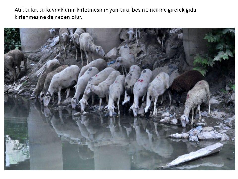 Atık sular, su kaynaklarını kirletmesinin yanı sıra, besin zincirine girerek gıda kirlenmesine de neden olur.