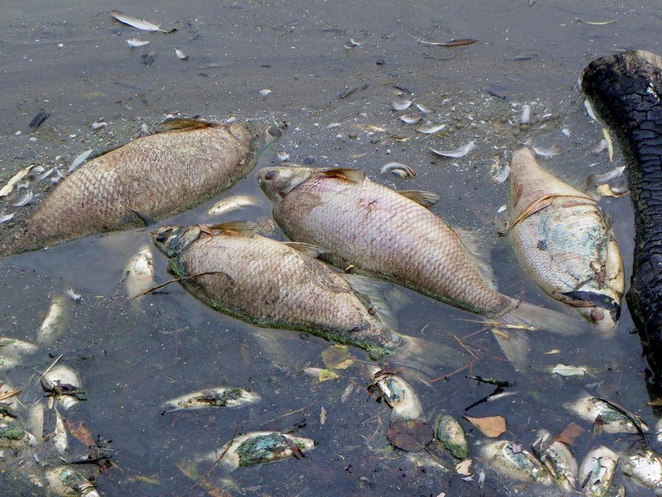 Atık suların, yerleşim yerlerinden toplanarak uzaklaştırılması ve zararsızlaştırılması gerekir.