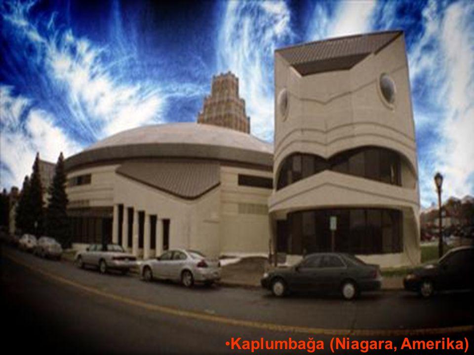 29.05.2016BÜLENT FATİN ÖZMEN 23 04 2009 Kaplumbağa (Niagara, Amerika)