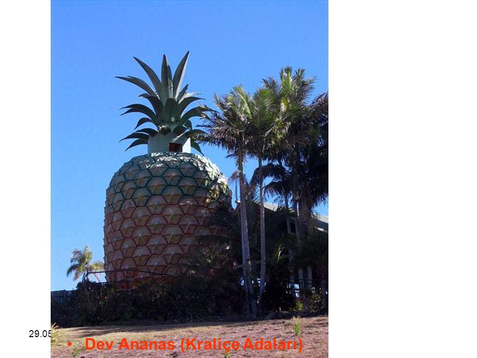 29.05.2016BÜLENT FATİN ÖZMEN 23 04 2009 Dev Ananas (Kraliçe Adaları)