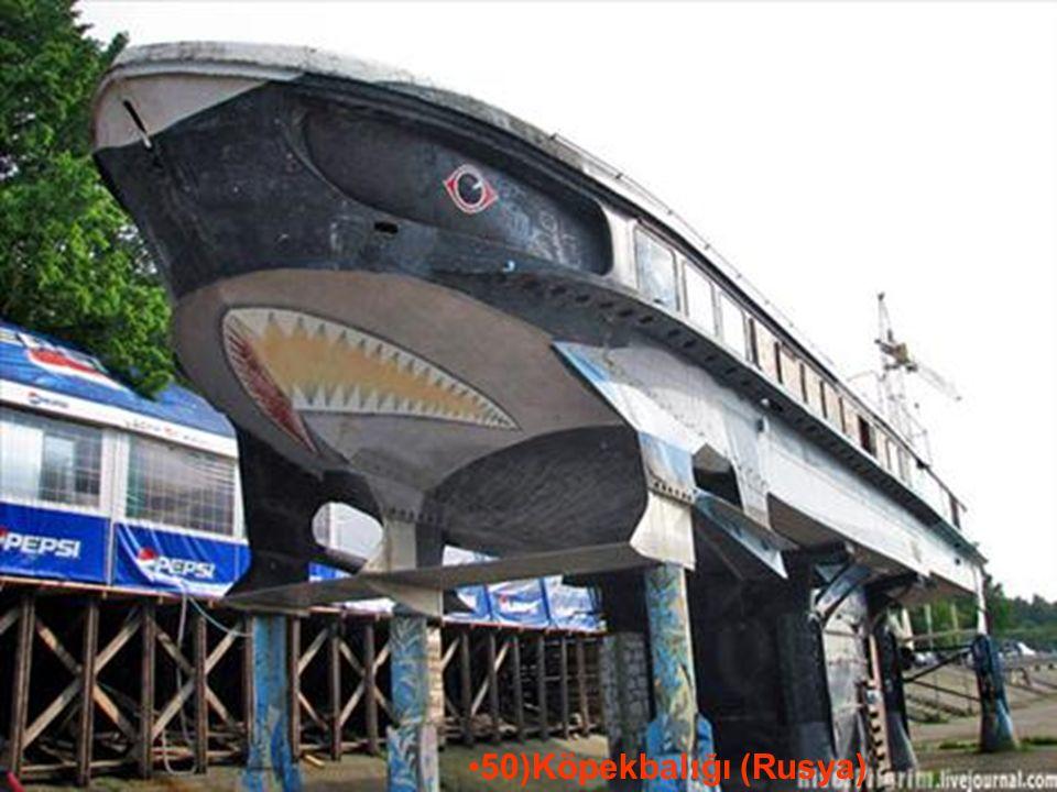 29.05.2016BÜLENT FATİN ÖZMEN 23 04 2009 50)Köpekbalığı (Rusya)
