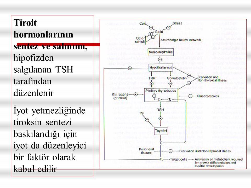 Tiroit hormonlarının sentez ve salınımı, hipofizden salgılanan TSH tarafından düzenlenir İyot yetmezliğinde tiroksin sentezi baskılandığı için iyot da düzenleyici bir faktör olarak kabul edilir