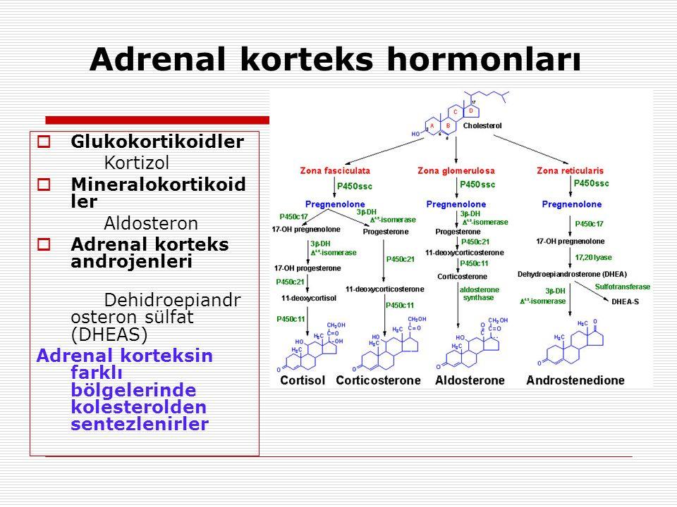 Adrenal korteks hormonları  Glukokortikoidler Kortizol  Mineralokortikoid ler Aldosteron  Adrenal korteks androjenleri Dehidroepiandr osteron sülfat (DHEAS) Adrenal korteksin farklı bölgelerinde kolesterolden sentezlenirler