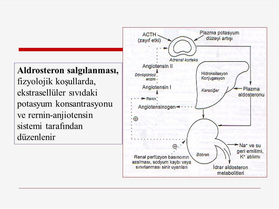 Aldrosteron salgılanması, fizyolojik koşullarda, ekstrasellüler sıvıdaki potasyum konsantrasyonu ve rernin-anjiotensin sistemi tarafından düzenlenir