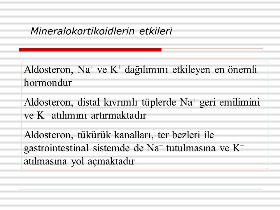 Mineralokortikoidlerin etkileri Aldosteron, Na + ve K + dağılımını etkileyen en önemli hormondur Aldosteron, distal kıvrımlı tüplerde Na + geri emilimini ve K + atılımını artırmaktadır Aldosteron, tükürük kanalları, ter bezleri ile gastrointestinal sistemde de Na + tutulmasına ve K + atılmasına yol açmaktadır