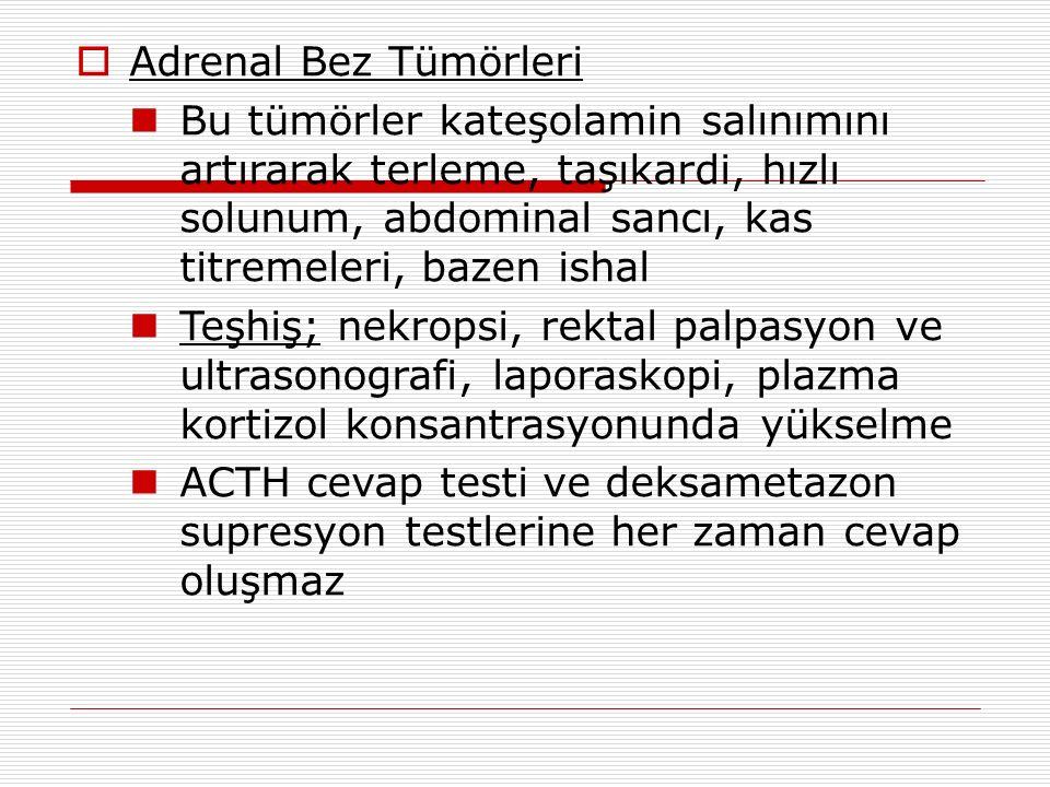  Adrenal Bez Tümörleri Bu tümörler kateşolamin salınımını artırarak terleme, taşıkardi, hızlı solunum, abdominal sancı, kas titremeleri, bazen ishal Teşhiş; nekropsi, rektal palpasyon ve ultrasonografi, laporaskopi, plazma kortizol konsantrasyonunda yükselme ACTH cevap testi ve deksametazon supresyon testlerine her zaman cevap oluşmaz