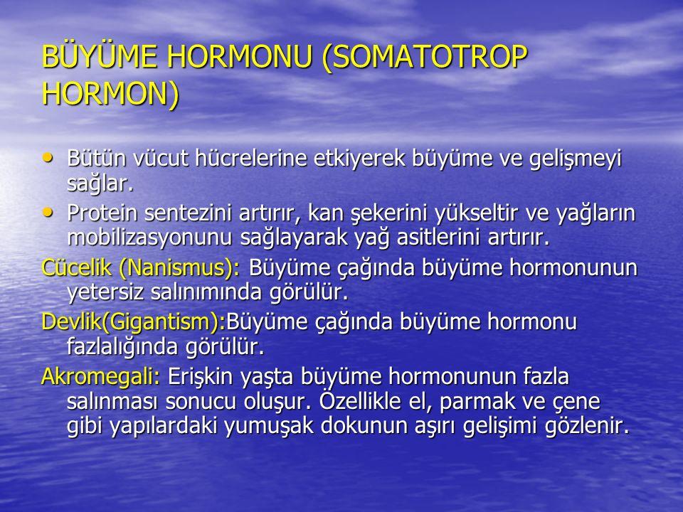 BÜYÜME HORMONU (SOMATOTROP HORMON) Bütün vücut hücrelerine etkiyerek büyüme ve gelişmeyi sağlar.