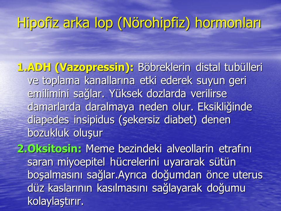 Hipofiz arka lop (Nörohipfiz) hormonları 1.ADH (Vazopressin): Böbreklerin distal tubülleri ve toplama kanallarına etki ederek suyun geri emilimini sağlar.
