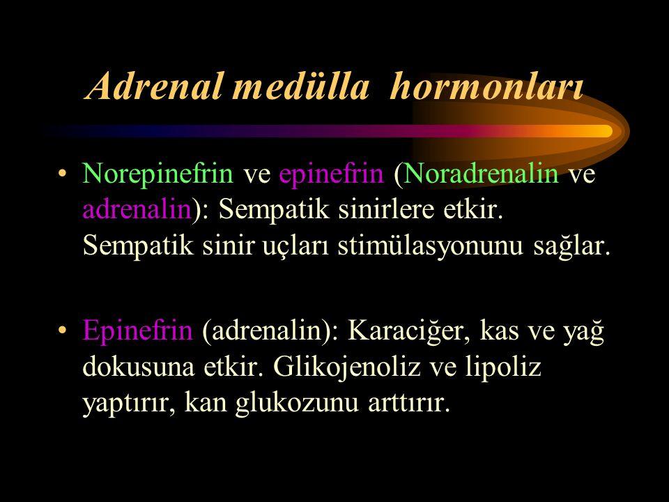 Adrenal medülla hormonları Norepinefrin ve epinefrin (Noradrenalin ve adrenalin): Sempatik sinirlere etkir. Sempatik sinir uçları stimülasyonunu sağla