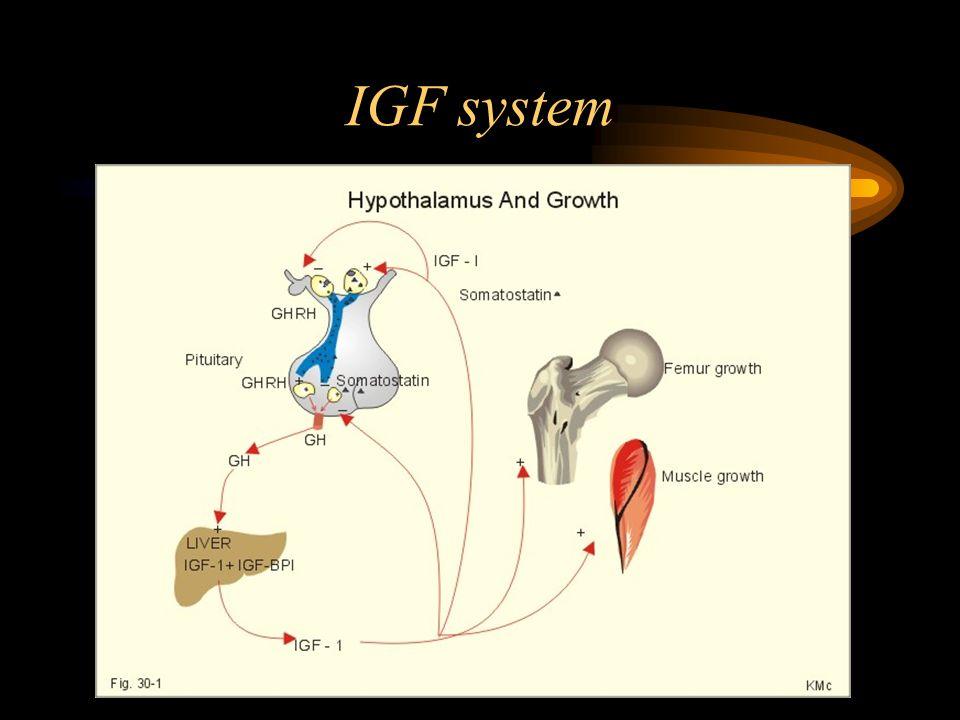 IGF system