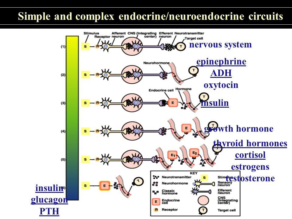 Thyroid hormones: tyrosine derivatives