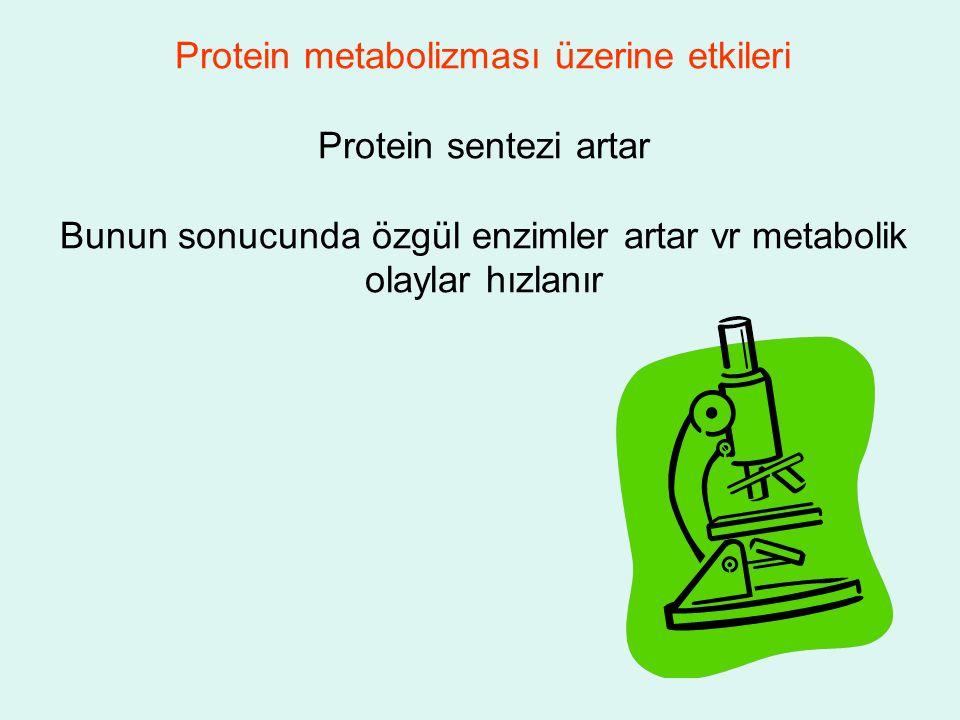 Protein metabolizması üzerine etkileri Protein sentezi artar Bunun sonucunda özgül enzimler artar vr metabolik olaylar hızlanır