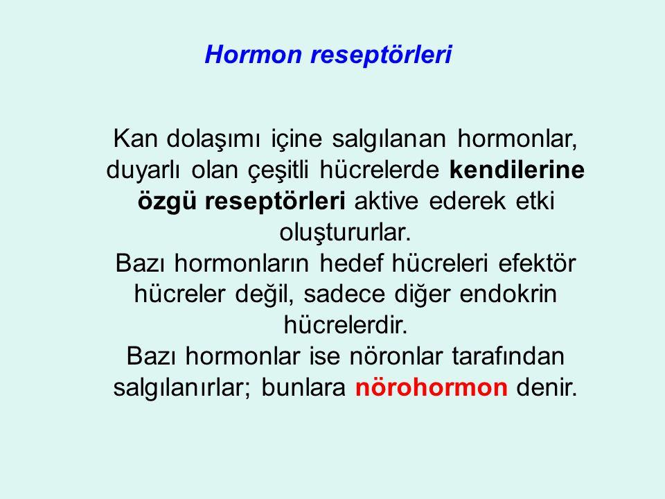 Hormon reseptörleri Kan dolaşımı içine salgılanan hormonlar, duyarlı olan çeşitli hücrelerde kendilerine özgü reseptörleri aktive ederek etki oluştururlar.