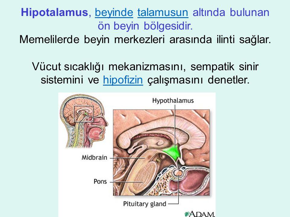 Hipotalamus, beyinde talamusun altında bulunan ön beyin bölgesidir.beyindetalamusun Memelilerde beyin merkezleri arasında ilinti sağlar.