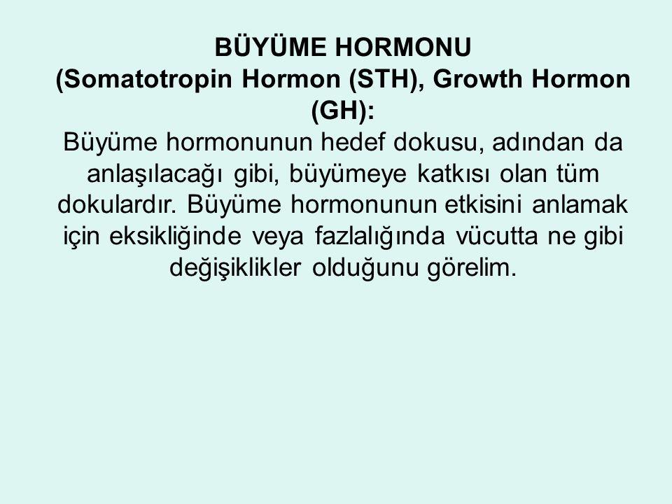 BÜYÜME HORMONU (Somatotropin Hormon (STH), Growth Hormon (GH): Büyüme hormonunun hedef dokusu, adından da anlaşılacağı gibi, büyümeye katkısı olan tüm dokulardır.