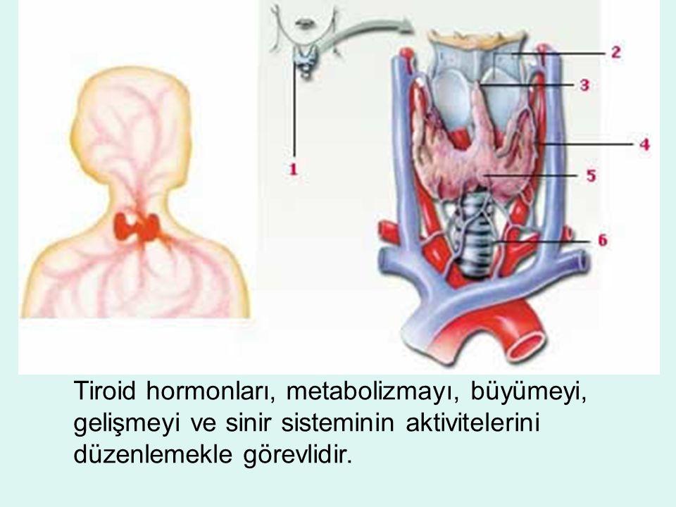 Tiroid hormonları, metabolizmayı, büyümeyi, gelişmeyi ve sinir sisteminin aktivitelerini düzenlemekle görevlidir.