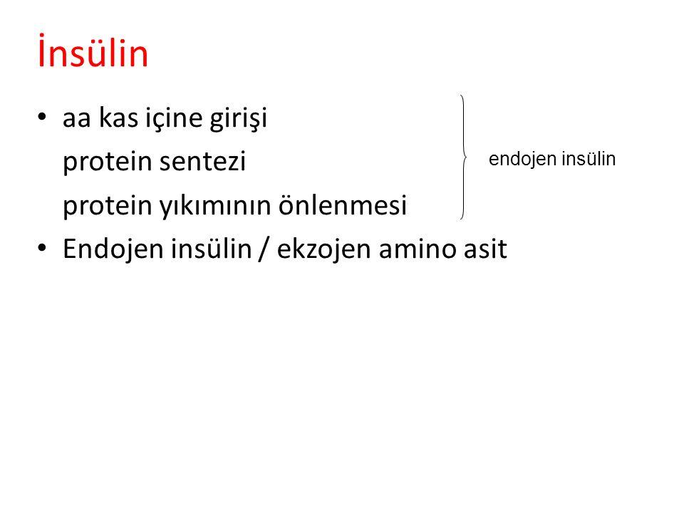 İnsülin aa kas içine girişi protein sentezi protein yıkımının önlenmesi Endojen insülin / ekzojen amino asit endojen insülin
