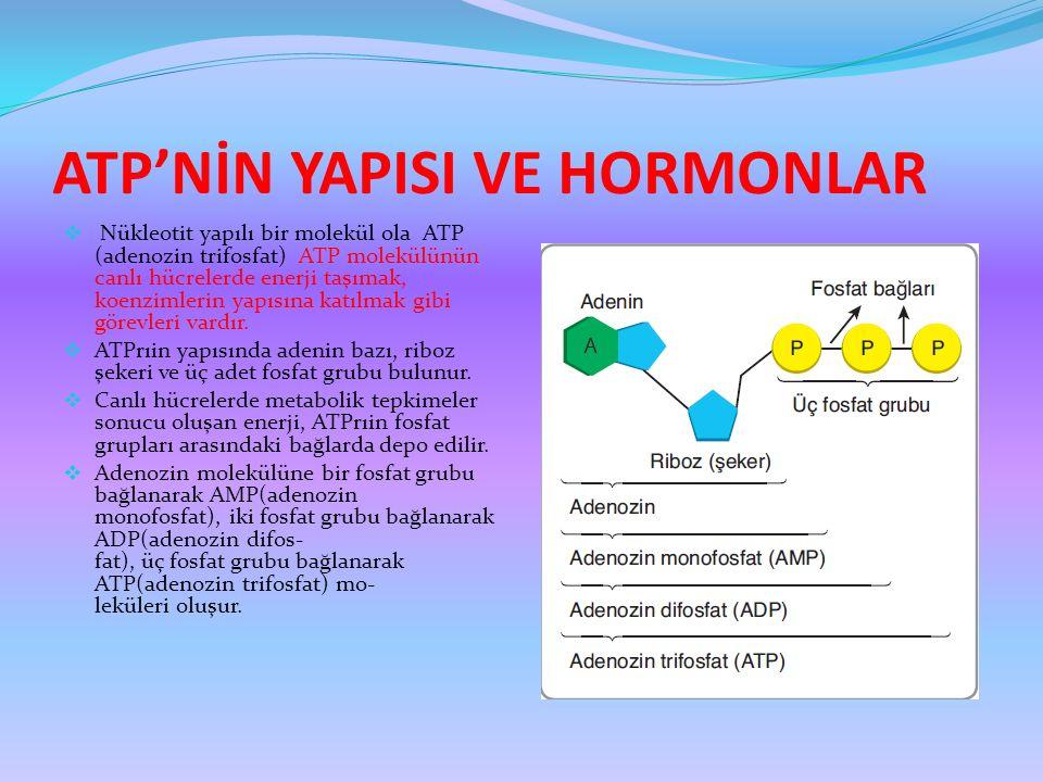 ATP'NİN YAPISI VE HORMONLAR  Nükleotit yapılı bir molekül ola ATP (adenozin trifosfat) ATP molekülünün canlı hücrelerde enerji taşımak, koenzimlerin