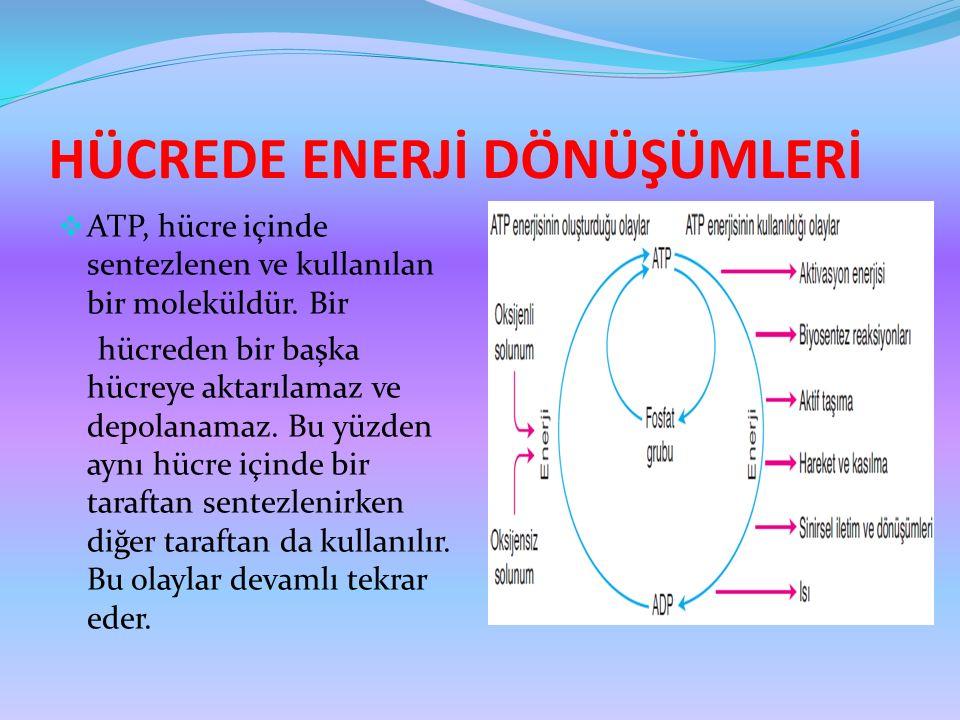 HÜCREDE ENERJİ DÖNÜŞÜMLERİ  ATP, hücre içinde sentezlenen ve kullanılan bir moleküldür. Bir hücreden bir başka hücreye aktarılamaz ve depolanamaz. Bu