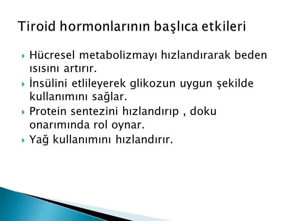  Hücresel metabolizmayı hızlandırarak beden ısısını artırır.  İnsülini etlileyerek glikozun uygun şekilde kullanımını sağlar.  Protein sentezini hı