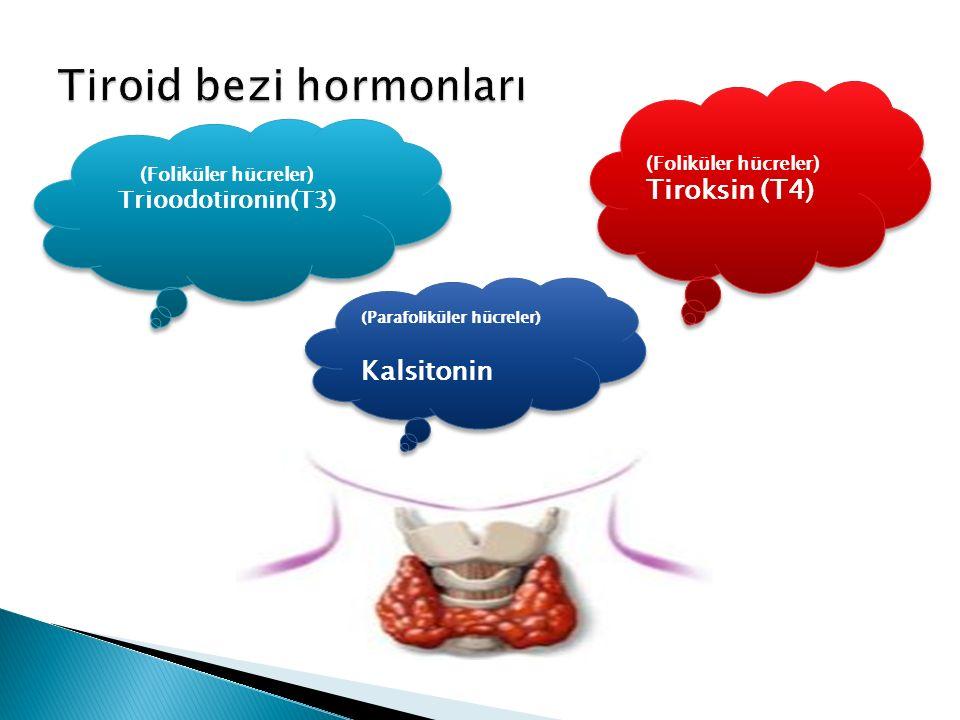 (Foliküler hücreler) Tiroksin (T4) (Foliküler hücreler) Tiroksin (T4) (Foliküler hücreler) Trioodotironin(T3) (Foliküler hücreler) Trioodotironin(T3) (Parafoliküler hücreler) Kalsitonin (Parafoliküler hücreler) Kalsitonin