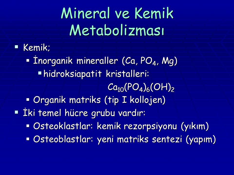 Mineral ve Kemik Metabolizması  Kemik;  İnorganik mineraller (Ca, PO 4, Mg)  hidroksiapatit kristalleri: Ca 10 (PO 4 ) 6 (OH) 2  Organik matriks (tip I kollojen)  İki temel hücre grubu vardır:  Osteoklastlar: kemik rezorpsiyonu (yıkım)  Osteoblastlar: yeni matriks sentezi (yapım)