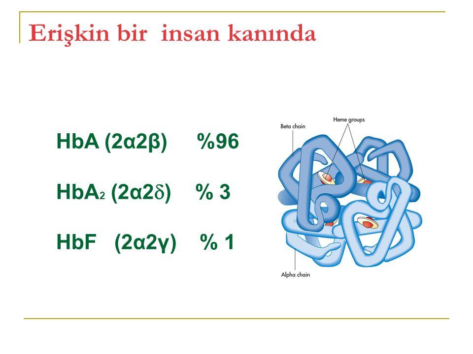 Erişkin bir insan kanında HbA (2α2β) %96 HbA 2 (2α2  ) % 3 HbF (2α2γ) % 1