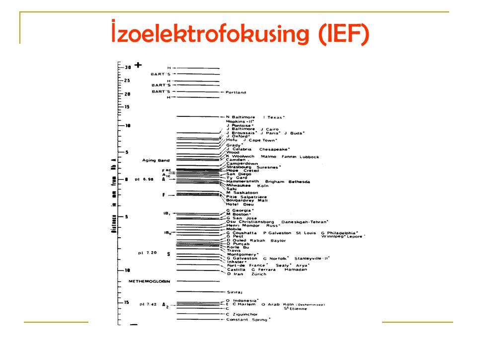 İ zoelektrofokusing (IEF)