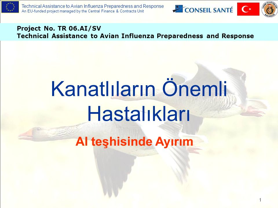 Technical Assistance to Avian Influenza Preparedness and Response An EU-funded project managed by the Central Finance & Contracts Unit 2 Ne olabilir ?