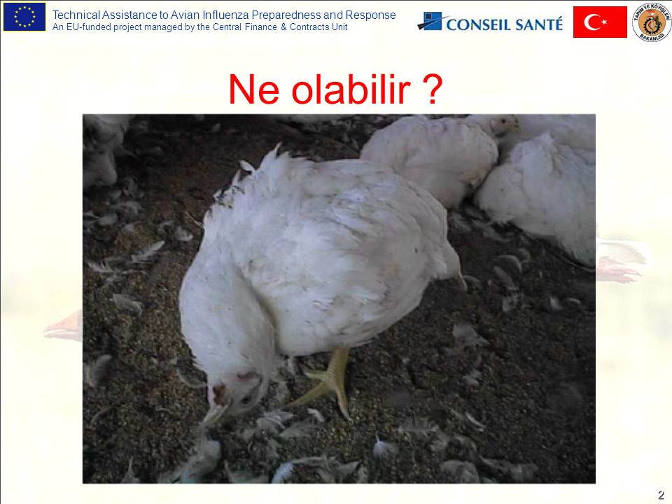 Technical Assistance to Avian Influenza Preparedness and Response An EU-funded project managed by the Central Finance & Contracts Unit 33