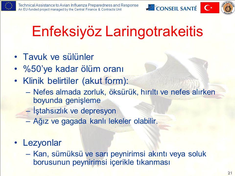 Technical Assistance to Avian Influenza Preparedness and Response An EU-funded project managed by the Central Finance & Contracts Unit 21 Enfeksiyöz Laringotrakeitis Tavuk ve sülünler %50'ye kadar ölüm oranı Klinik belirtiler (akut form): –Nefes almada zorluk, öksürük, hırıltı ve nefes alırken boyunda genişleme –İştahsızlık ve depresyon –Ağız ve gagada kanlı lekeler olabilir.