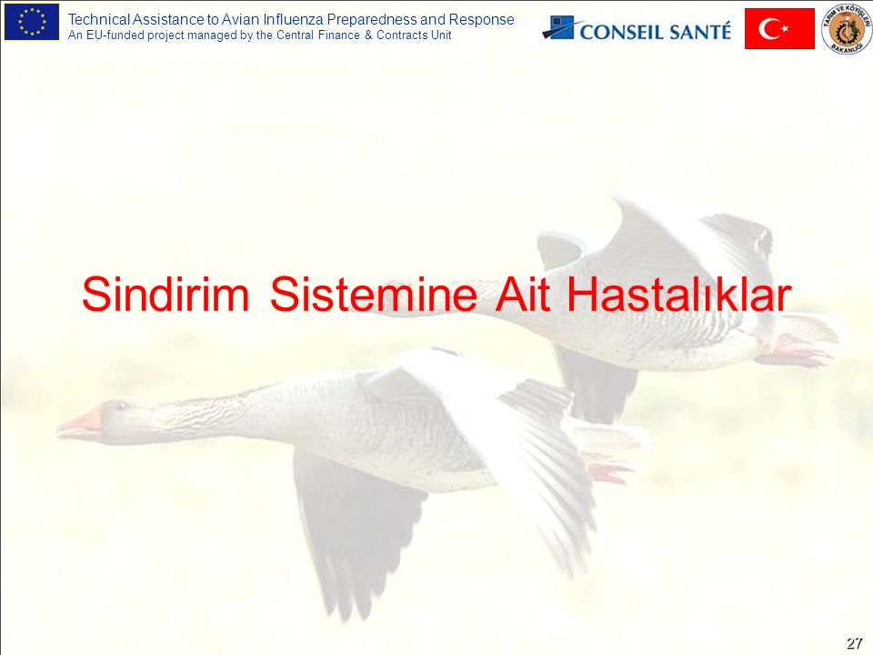 Technical Assistance to Avian Influenza Preparedness and Response An EU-funded project managed by the Central Finance & Contracts Unit 27 Sindirim Sistemine Ait Hastalıklar