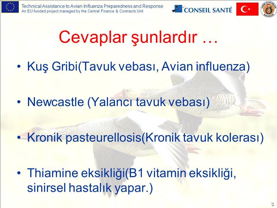 Technical Assistance to Avian Influenza Preparedness and Response An EU-funded project managed by the Central Finance & Contracts Unit 14 Klinik belirtiler (3) Kronik vakalarda olasıEvetBükülmüş boyun --Bacaklarda deri altı kanamalar Diğer bulgular Nadiren topallıkEvetBacaklarda ve/veya kanatlarda felç Sinir sistemine ait bulgular Pasteurella (Tavuk kolerası) Newcastle (Yalancı tavuk vebası) Kuş Gribi (Tavuk vebası)