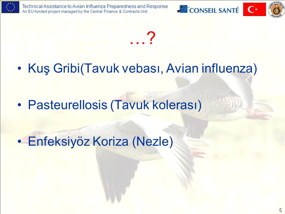 Technical Assistance to Avian Influenza Preparedness and Response An EU-funded project managed by the Central Finance & Contracts Unit 5 … ….