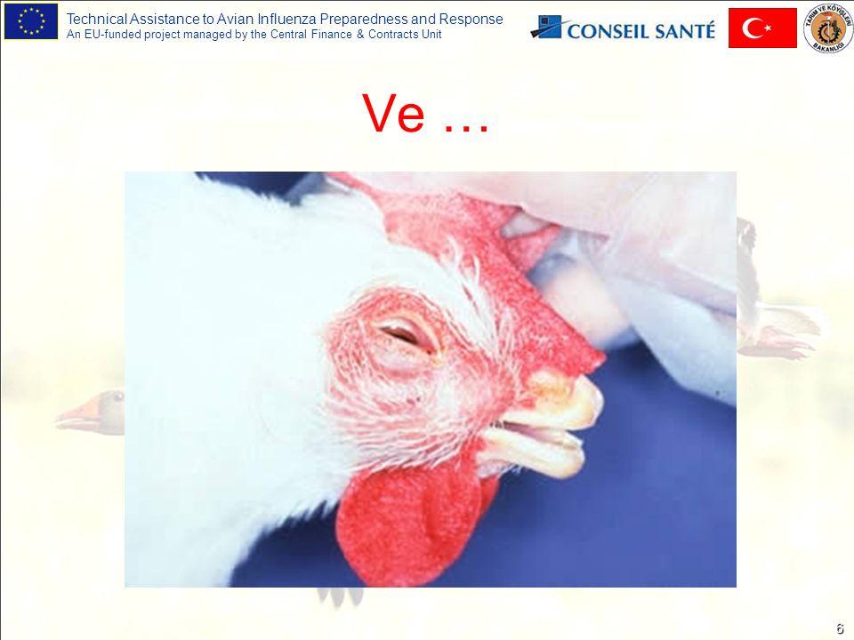Technical Assistance to Avian Influenza Preparedness and Response An EU-funded project managed by the Central Finance & Contracts Unit 7 Bir kez daha… Kuş Gribi (Tavuk vebası, Avian influenza), Enfeksiyöz koriza (Nezle), Mikoplasmosis (M.