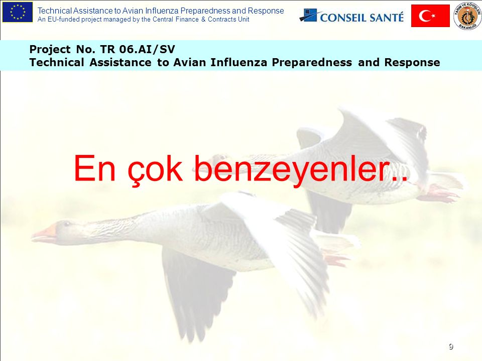 Technical Assistance to Avian Influenza Preparedness and Response An EU-funded project managed by the Central Finance & Contracts Unit 20 Hava keselerinde iltihap Kötü yumurta kabuk kalitesi