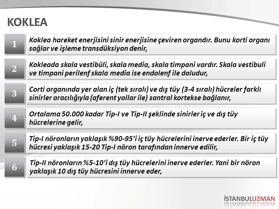 1 1 Koklea hareket enerjisini sinir enerjisine çeviren organdır. Bunu korti organı sağlar ve işleme transdüksiyon denir, 2 2 Kokleada skala vestibüli,