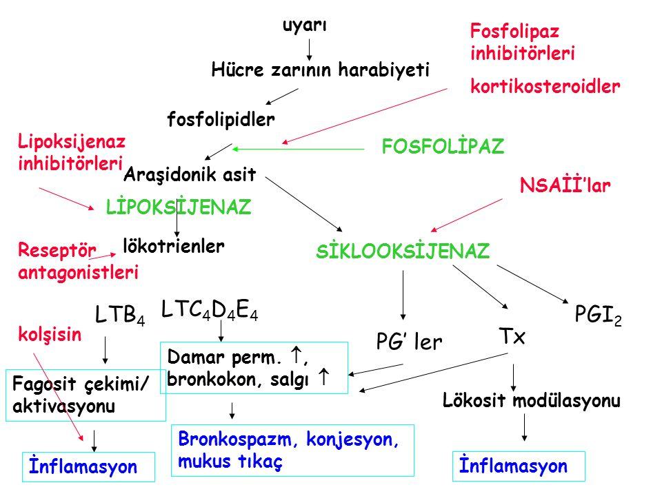 uyarı Hücre zarının harabiyeti fosfolipidler Araşidonik asit lökotrienler LTB 4 LTC 4 D 4 E 4 Fagosit çekimi/ aktivasyonu İnflamasyon Damar perm. , b