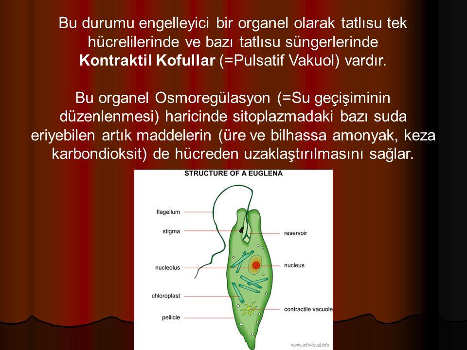 Bu durumu engelleyici bir organel olarak tatlısu tek hücrelilerinde ve bazı tatlısu süngerlerinde Kontraktil Kofullar (=Pulsatif Vakuol) vardır.
