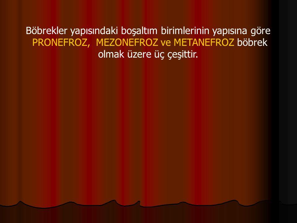 Böbrekler yapısındaki boşaltım birimlerinin yapısına göre PRONEFROZ, MEZONEFROZ ve METANEFROZ böbrek olmak üzere üç çeşittir.