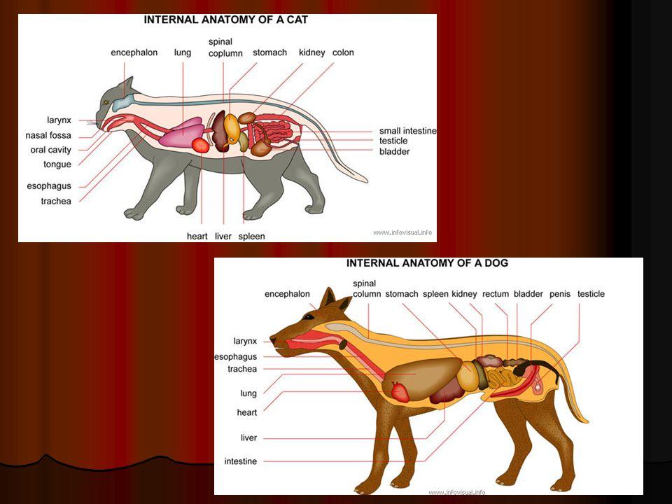 House cat anatomy