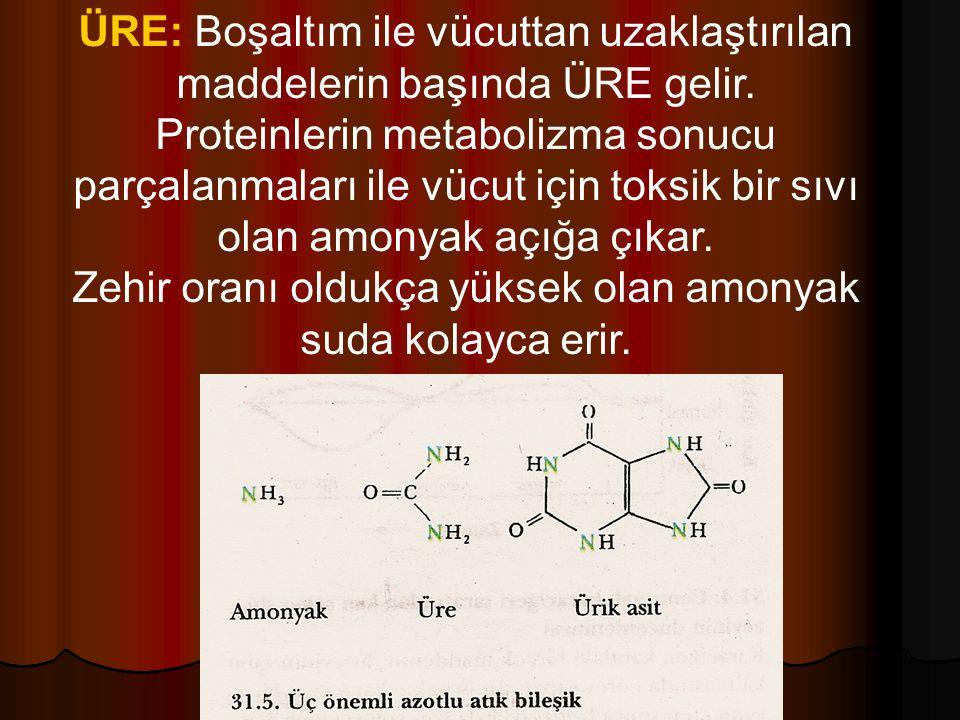 ÜRE: Boşaltım ile vücuttan uzaklaştırılan maddelerin başında ÜRE gelir.