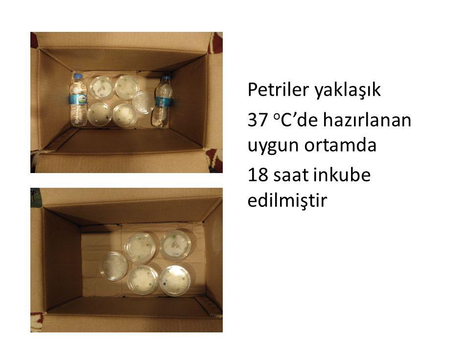 Petriler yaklaşık 37 o C'de hazırlanan uygun ortamda 18 saat inkube edilmiştir